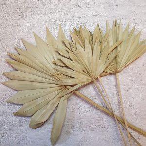 Zöld pálma levél