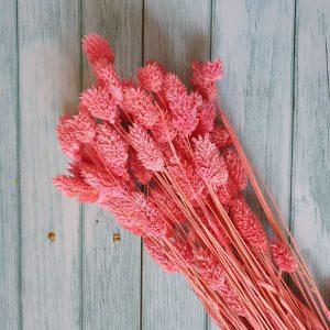 Pink fénymag