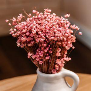 Pink Glixia