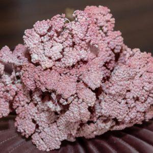 Pink achillea