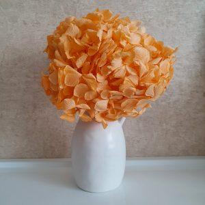 Narancs hortenzia